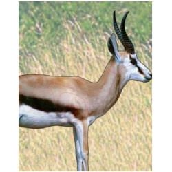 Target Garipani Springbok
